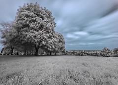 Hilly Fields Park (blackwoodse6) Tags: park uk blue england white tree ir sony bluesky infrared southlondon southeastlondon hoyar72 londonparks hillyfieldspark infraredphotography se13 720nm se4 sonya700