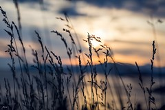 By The Water (Janey Song) Tags: park sunset beach water grass clouds landscape weeds dusk bythewater vancouvercanada ef85mmf12liiusm omot canon5dmarkiii
