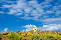 Merge (hecticskeptic) Tags: arizona birds spring woodpecker squirrel hummingbird desert cardinal nogales birding az deer hummingbirds morgan californiadesert maderacanyon arizonadesert southernarizona mexicanjay eleganttrogon lakepatagonia markmorgan markamorgan