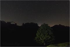 Midnight at Yann (shivanhellcat) Tags: tree dark stars arbol noche midnight estrellas oscuro medianoche