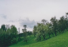 where icicles hung (ephebic bears) Tags: sky mist film clouds analog austria spring blossoms analogue appletrees salzkammergut prakticamtl5b