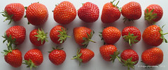Strawberries for LinkedIn (edgarkowa) Tags: strawberry natural sweet fresh frucht fresco sss erdbeere frutilla frisch fresa