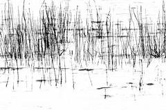 up and across (apalca) Tags: light blackandwhite reed water reflections zwartwit maas riet meuse gelderland liendensewaard