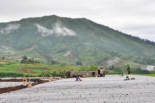 dieng plateau - java - indonesie 26
