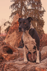 Jake (Cruzin Canines Photography) Tags: dog pet pets dogs nature animal animals canon outside outdoors evening naturallight canine pit pitbull domestic tamron goldenhour americanpitbullterrier domesticanimal pitbullterrier 5ds canon5ds eos5ds tamron28300mmf3563divcpzd canoneos5ds