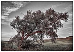 Brother Tree (kurtwolf303) Tags: sky tree nature topf25 landscape topf50 topf75 scenery 500v20f natur pflanze himmel duplex landschaft topf100 baum 900views 250v10f entsttigt flickrelite unlimitedphotos awardtree canoneos600d kurtwolf303