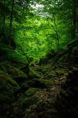 Slipped In (itsnickpryor) Tags: park trees summer green nature rain rock forest river woods nikon rainforest rocks state iowa cliffs adventure explore caves ferns exploration humid maquoketa