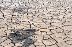 Oliver Bruns-5.jpg (oliverbruns) Tags: nature landscape rocks great dry soil cracks bahamas exuma greatexuma