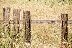 Fence, Mendocino (Sharon Mollerus) Tags: ocean california sea beach nature fence unitedstates places subject mendocino xss