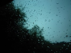 Rainy Days and no Tomorrow. (Pagynwb) Tags: blue trees tree green window wet water car rain drive drops thought driving sad thoughtful raindrops raining raindrop wistful drizzling