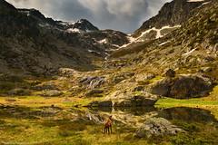The visitor (Matthieu Parmentier) Tags: france alps alpes spring nikon ecrins d800 1635 valgaudemar petarel heliopancpl leefiltergnd09soft