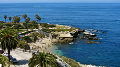 La Jolla Cove (cjbphotos1) Tags: ocean california sea beach swimming palms sandiego cove horizon diving lajolla snorkeling palmtrees thecove