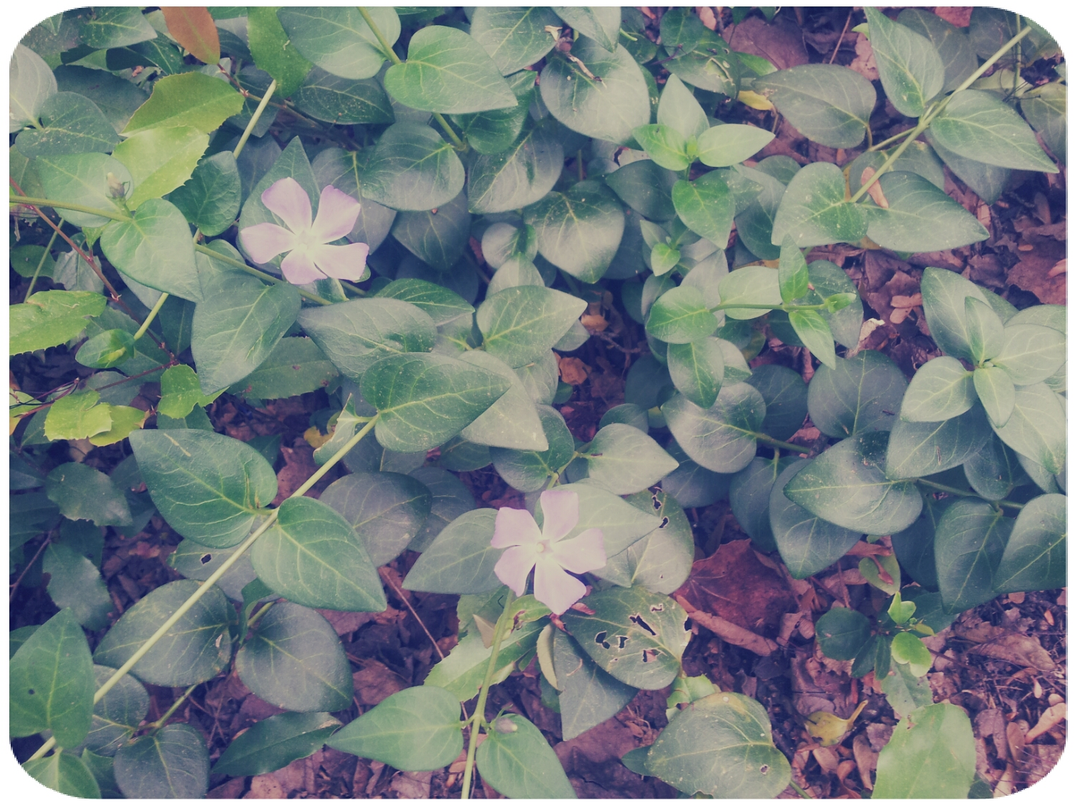 2012-03-30 13.54.15_Salomon_Round.jpg