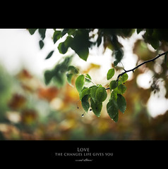 120 Quotes project | Quote 66 (Musaad (CJ)) Tags: life autumn our winter tree green love nature rain weather yellow project season photography leaf spring you quote daily cj change changes challenge gives od ocdc musaad azzahrani