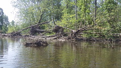 109_2023 - Copy (Dave Garvin) Tags: trip river canoe damage tornado huron