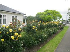 Levin Rose Garden
