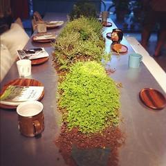 ปลูกต้นไม้กันบนโต๊ะกินข้าวเลยทีเดียว กินข้าวอยู่จะมีหนอนออกมาเซย์ไฮไหมนั่น