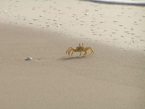 Crabes sur la plage de Saint-Louis du Sénégal
