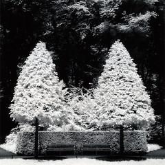 Schloss Benrath III (Silberton) Tags: hasselblad mcp efke infrarot adox moersch se6 ir820 mytold