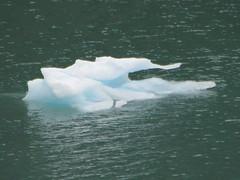 alaska icefloe