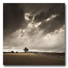 (jose.singla) Tags: light shadow sky espaa color tree luz clouds rural canon landscape spain natural sigma sombra paisaje murcia cielo nubes rbol campo 1020 50d mygearandme josesingla joseantoniogimenez
