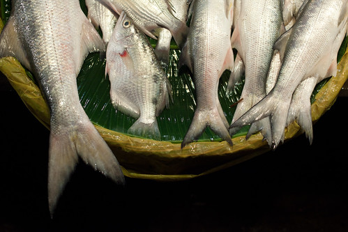 Fish Market in Khulna, Bangladesh. Photo by Mike Lusmore/Duckrabbit, 2012
