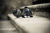 Palomos (David A.R.) Tags: david canon de eos grupo kdd lugo oficial castillo visita vigo fotografo araujo fotografos peneda kdda pambre a 40d canoneos40d kdd´s davidar 41ª