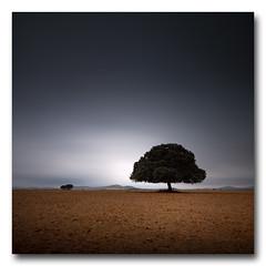 (jose.singla) Tags: light shadow españa color tree luz canon landscape spain interior sigma sombra paisaje minimal murcia árbol 1020 50d josesingla joseantoniogimenez