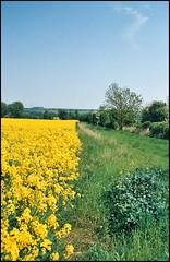 Blue Yellow Green (tatraškoda) Tags: uk flowers blue england green film yellow rural 35mm geotagged nikon britain rape lincolnshire analogue f5 rapeseed oilseed c200 fujicolor horkstow