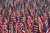 A Parade of Glory (TPorter2006) Tags: liberty fest memorialday blue flag may red remember rememrance spring tporter2006 texas white libertyfest blueribbonwinner 4thofjuly 4th country usa redwhiteblue soldiers fav10 fav20 fav30