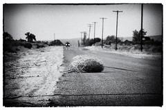Tumbleweed (Lori_Bucci_Photography) Tags: travel blackandwhite abandoned tourism landscape la blackwhite losangeles solitude desert roadtrip gritty headlights lancaster antelopevalley palmdale tumbleweed desertlandscape desertroad dustyroad loribucciphotography loribucci lorilockhartbucci