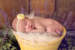 Dreaming in the garden (Heidi Hope) Tags: newborn newborngirl newbornphotographer heidihopephotography heidihope riphotographer warwickriphotographer rhodeislandbabyportraitphotography