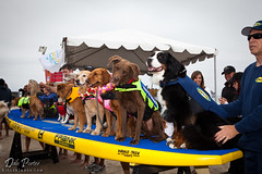 20120616_DogSurf_Loews2012_KillerImage_1032