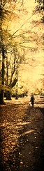 Coming Home To Meet The One I Love (nadtheartist) Tags: road old autumn trees shadow sun love home leaves person path romance shade bags distance carrier cominghome maturerelationship