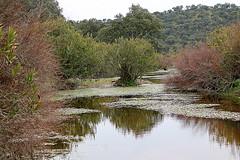 Torrecampo, Crdoba, Andalusia -Spain- (pictumad) Tags: wild espaa green nature water rio river countryside spain agua country andalucia cordoba campo andalusia 2014 worldwild torrecampo flickrtravelaward