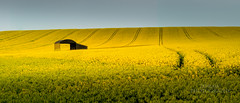 That barn. (289RAW) Tags: barn landscape dorset rapeseed 289raw