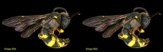 Wasp 065943 cross-view 3D