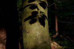 shadow (horschte68) Tags: shadow tree nature forest pentax treetrunk