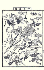 Marvel-of-Peru, Chinese milk-vetch, bunchflower daffodil, florists chrysanthemum, Asiatic dayflower, Japanese kerria and camellia (Japanese Flower and Bird Art) Tags: flower art japan japanese book chinese picture daffodil camellia commelinaceae fabaceae chrysanthemum japonica asteraceae communis dayflower nihonga asiatic narcissus mirabilis tazetta intaglio nyctaginaceae jalapa kerria astragalus sinicus rosaceae amaryllidaceae milkvetch grandiflorum commelina marvelofperu theaceae yasujiro florists bunchflower matama readercollection