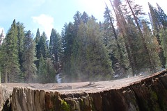 Evaporate from the stump tree (daveynin) Tags: forest nps stump sequoia marktwain evaporate