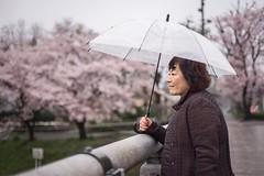 Yoko (M.Boubou) Tags: city bridge pink tree smile rain japan umbrella happy women day culture sakura raining hachioji japenese japa