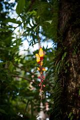Fleur - La Réunion