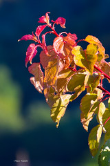 Risvegli (Incommensurabile) Tags: leaves foglie nikon natura rugiada colori 180mm