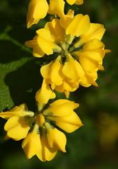 DSC_1517 (PeaTJay) Tags: flowers plants macro nature gardens fauna outdoors reading flora micro closeups berkshire lowerearley nikond750