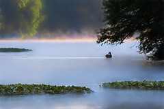 An Early Morning Dip (Goromo) Tags: morning mist river dawn morninglight steam deer foxriver wading