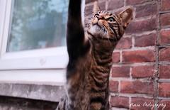 Pussycat (Mone-Photography) Tags: cat rotterdam pussy pussycat kittycat