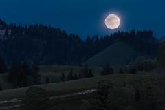 Moonrise (Role Bigler) Tags: moon tree nature schweiz switzerland mond woods suisse natur hills moonrise rise wald emmental hgel mondaufgang tannenwald hgelig canoneos5dsr ef4070200isusml