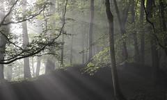 Morning light (Simon Verrall) Tags: trees light sunlight june sussex woods ash midhurst morningmist 2016 thesouthdowns bepton