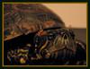 Michelângelo (Ricardo Venerando) Tags: life pet green nature animal brasil natureza olympus explore abc réptil discovery soe tartaruga naturesfinest conservacion nationalgeografic platinumphoto abcpaulista diamondclassphotographer ysplix goldstaraward ricardovenerando