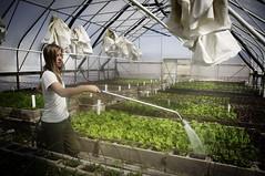 greenhouse greens (Mary Hockenbery (reddirtrose)) Tags: county family colorado farm greenhouse greens paonia livingfarm northforkvalley